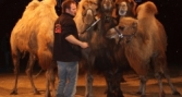 kamelprobe